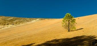 Albero solo al deserto Immagini Stock Libere da Diritti