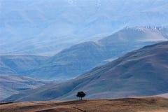 Albero solo al piede dell'intervallo di Drakensberg fotografia stock libera da diritti