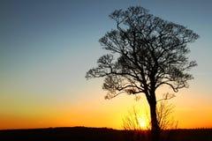 Albero solo al tramonto Fotografie Stock Libere da Diritti