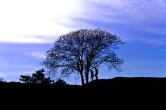 Albero solo al tramonto ed a una coppia di amanti immagini stock libere da diritti