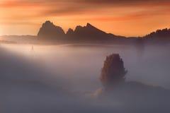 Albero solo al tramonto nebbioso nelle alpi del sud del Tirolo Fotografia Stock