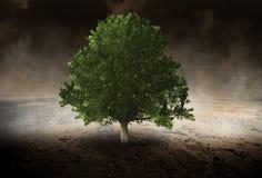 Albero solo, ambiente, Evironmentalist, deserto fotografia stock