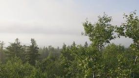 Albero solo che pende dalle rocce nelle montagne Paesaggio con roccia in foresta al tramonto Rocce massicce e vista al stock footage