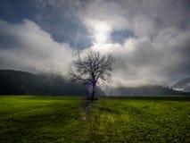 Albero solo con backlightning e nebbia fotografia stock libera da diritti