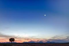 Albero solo con le montagne al crepuscolo, la Germania Fotografie Stock Libere da Diritti