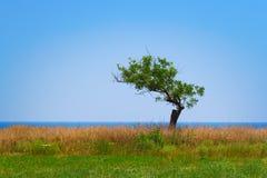 Albero solo dalla spiaggia Fotografie Stock