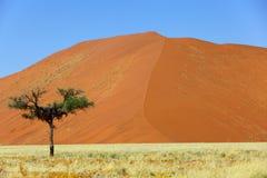 Albero solo davanti all'alta duna Fotografia Stock Libera da Diritti
