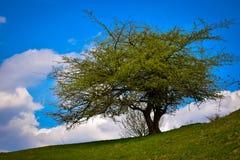 albero solo del prato dell'erba asciutta di autunno Fotografia Stock