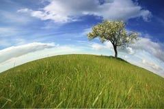 Bello paesaggio della molla con l'albero solo Fotografia Stock Libera da Diritti