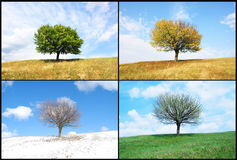 Albero solo dentro per la stagione Fotografia Stock