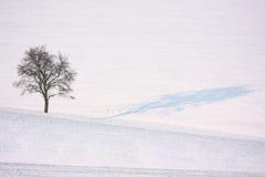 Albero solo di inverno fotografia stock libera da diritti
