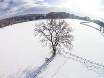 Albero solo di inverno Fotografie Stock Libere da Diritti