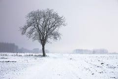 Albero solo di inverno Immagine Stock