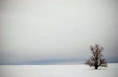 Albero solo di inverno nella scenetta della neve Immagini Stock Libere da Diritti