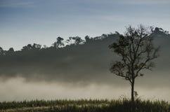 Albero solo di mattina Fotografia Stock Libera da Diritti