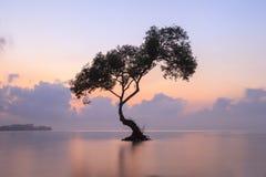Albero solo e l'alba, Chumphon, Tailandia Fotografie Stock