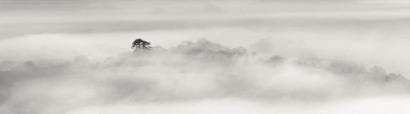 Albero solo in foschia, su una mattina fredda di dicembre immagini stock