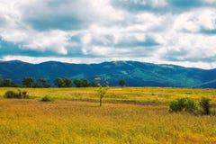 Albero solo fra le colline gialle e verdi ed i prati immagine stock