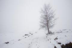 Albero solo in inverno Immagine Stock