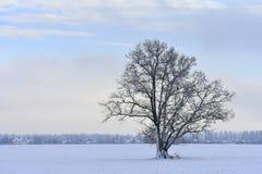 Albero solo Inverno della Lituania fotografie stock