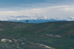 Albero solo Montagne e nubi fotografia stock