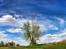 Albero solo nascosto della valle e vasto paesaggio del cielo blu Fotografie Stock