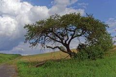 Albero solo in natura Fotografia Stock