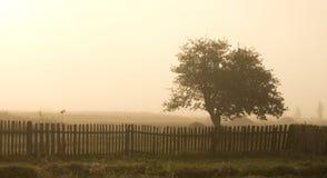 Albero solo in nebbia Fotografie Stock