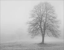 Albero solo in nebbia spessa di inverno Immagine Stock Libera da Diritti