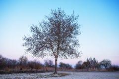 Albero solo nel campo, autunno Fotografia Stock