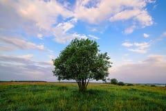 Albero solo nel campo con luce solare Fotografia Stock