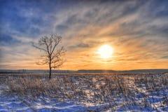 Albero solo nel campo, inverno al tramonto Immagini Stock Libere da Diritti