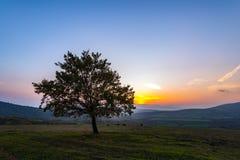 Albero solo nel campo a tempo di tramonto Fotografia Stock