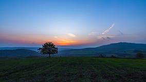 Albero solo nel campo a tempo di tramonto Fotografie Stock
