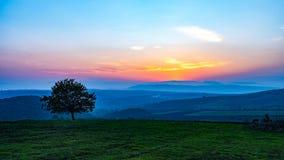 Albero solo nel campo a tempo di tramonto Immagini Stock