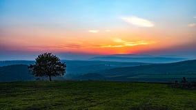 Albero solo nel campo a tempo di tramonto Fotografia Stock Libera da Diritti