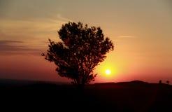 Albero solo nel campo a tempo di tramonto fotografie stock libere da diritti