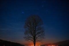 Albero solo nel cielo notturno fotografie stock libere da diritti