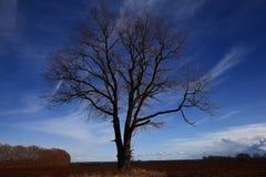 albero solo nel giacimento del vento Fotografia Stock Libera da Diritti