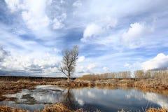 albero solo nel giacimento del vento Fotografia Stock