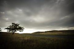Albero solo nel prato dell'alta montagna Fotografie Stock Libere da Diritti