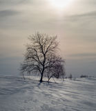 Albero solo nell'inverno in Russia Fotografie Stock