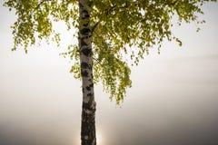 Albero solo nella mattina nebbiosa Immagine Stock Libera da Diritti