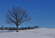Albero solo nella neve della collina Immagini Stock