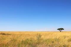 Albero solo nella savana africana Immagini Stock