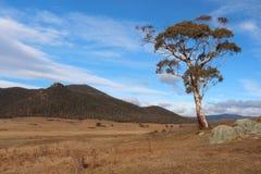 Albero solo nella valle di Orroral - Canberra fotografia stock