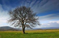 Albero solo nella valle su una priorità bassa del supporto Fotografia Stock