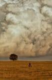Albero solo nelle nubi. immagini stock