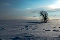 Albero solo in neve fotografie stock libere da diritti