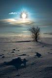 Albero solo in neve immagini stock libere da diritti